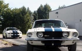 Обои деревья, полосы, Mustang, Ford, Shelby, GT500, мустанг
