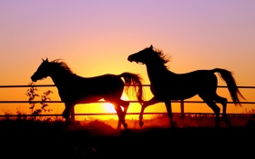 Обои небо, солнце, кони
