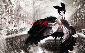 Картинка листья, цветы, красный, ветер, Девочка, монохромный