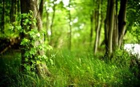 Картинка зелень, лес, лето, трава, деревья, размытость, вветки