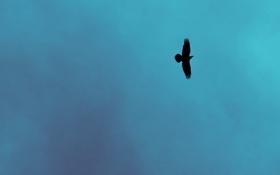 Обои небо, природа, фон, птица, минимализм, Ворон