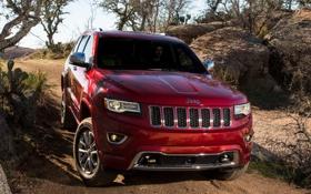 Картинка деревья, красный, Джип, передок, Jeep, Grand Cherokee, Гранд Чероке