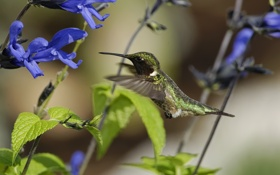 Обои цветы, птица, колибри, солнечно, полевые