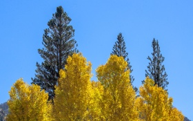 Обои осень, небо, листья, деревья