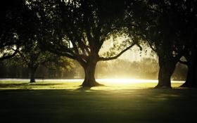 Картинка свет, деревья, парк