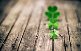 Обои green, clover, wood, trifoglio, three