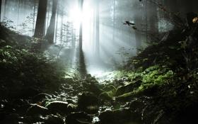 Картинка ручей, паутина, лес, природа