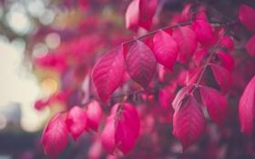 Обои листья, ветка, дерево