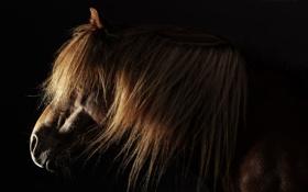Картинка морда, фон, конь