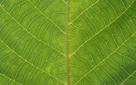 Обои лист, жилки, patterns