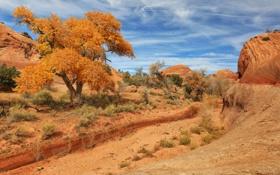 Картинка листья, камни, дерево, желтые, США, хребты, пески