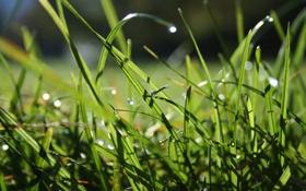 Картинка поле, трава, капли, grass, macro, dew drops