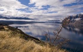 Обои трава, фото, вид, вода, природа, новая зеландия, пейзажи