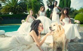 Картинка собака, пять, невест