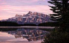 Картинка лес, природа, озеро, отражение, рассвет, гора, Two Jack lake