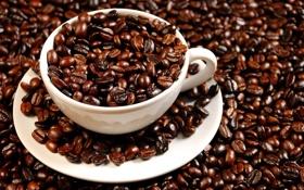 Обои кофе, Чашка, зернами, усыпанная