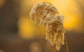 Картинка трава, макро, снег