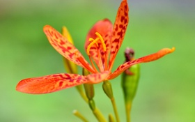 Картинка экзотика, природа, лепестки, растение, макро, тычинки