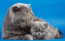 Обои кошки, фон, дом