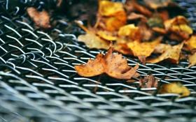 Обои осень, листья, решетка