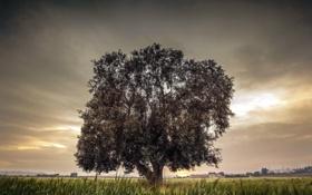 Обои поле, пейзаж, природа, дерево