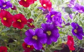 Обои листья, цветы, фиолетовые, красные, red, flowers, violet leaves
