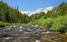Обои лес, небо, река, камни, поток