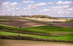 Обои весна, деревня близ Кракова, деревья, поля, Польша
