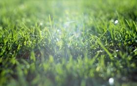 Обои трава, поле, зеленая, солнце, лето