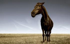Обои кони, лошади, трава, фото, поле, обои, животные