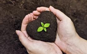Обои earth, life, hands, gardening