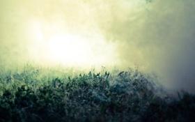 Обои трава, макро, природа, туман, роса, grass, nature