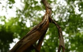 Обои листья, дерево, ствол, кора