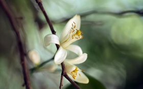 Картинка макро, цветы, белые, экзотика, flower, blossom, macro