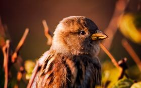 Картинка фон, клюв, птичка