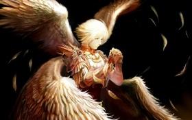 Обои темный фон, крылья, ангел, перья, арт, парень, tachikawa mushimaro