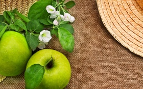 Картинка фрукт, зеленые яблоки, веточки, цветы яблони, листики