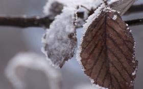 Обои холод, зима, снег, лист, ветка, сухой