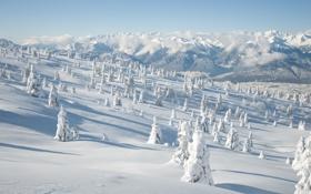 Обои зима, снег, деревья, горы, природа, холмы, пейзажи