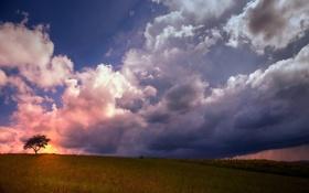 Картинка поле, небо, пейзаж, дерево