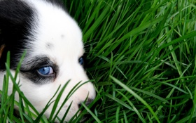 Обои green, grass, puppy, eyes, dog, animal, sweet