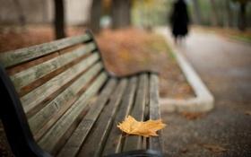 Картинка город, лист, улица, скамья