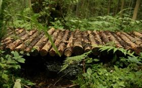 Обои лес, макро, деревья, природа, фото, обои, мосты