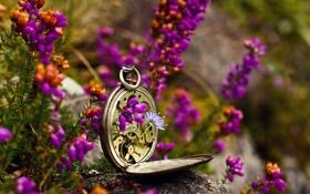 Обои макро, цветы, часы