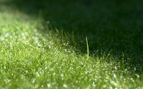 Обои трава, капли, макро, роса