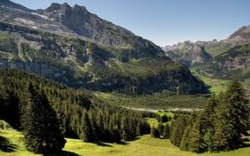 Обои summer, grass, trees, mountains, rocks