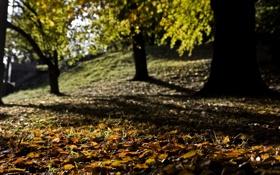 Обои листья, фотографии, осень, деревья, листопад, природа, осенние обои
