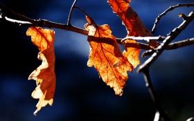 Обои природа, осень, ветка, листва