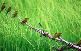 Обои трава, птицы, природа, ветка
