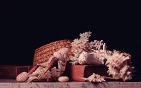 Обои книги, шляпа, кораллы, ракушки